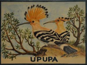 Upupa